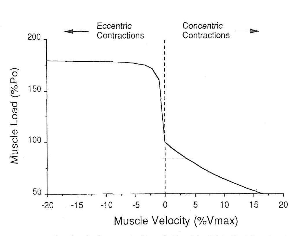 Повреждение мышц посредством упражнений