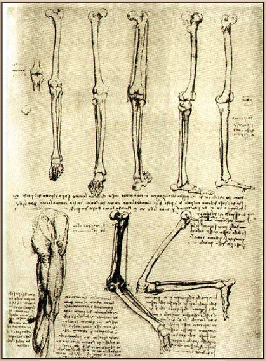 Тетради по анатомии Леонардо