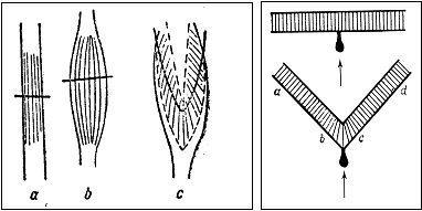 Лекция 2. История биомеханики