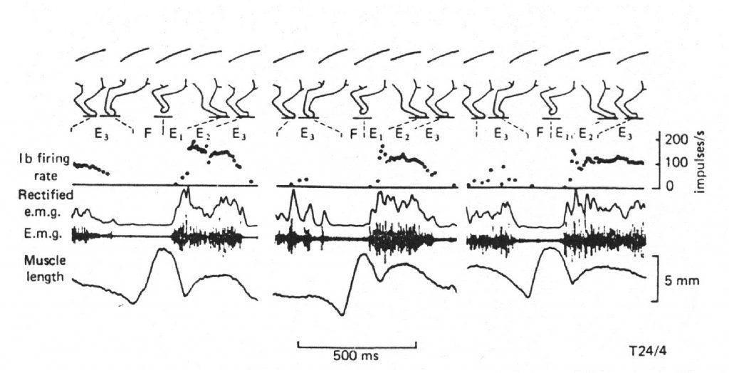 Моторная и сенсорная функции мышц в биомеханике локомоций