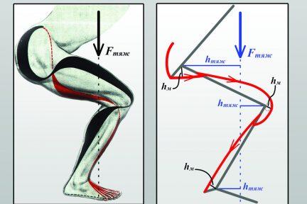 Миниатюра для записи Учебное пособие «Биомеханика мышц»