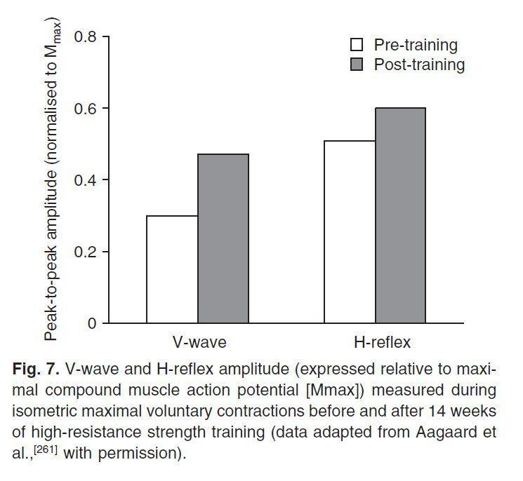 Адаптация мышц к силовой тренировке