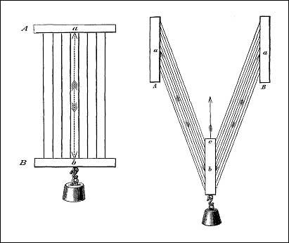 Вклад П.Ф. Лесгафта в биомеханику