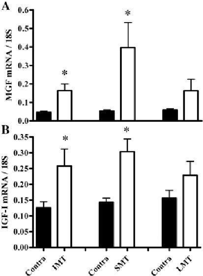 Гипертрофия мышц в ответ на различные режимы мышечного сокращения