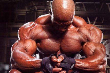 Миниатюра для записи В гипертрофированных мышцах углы перистости больше