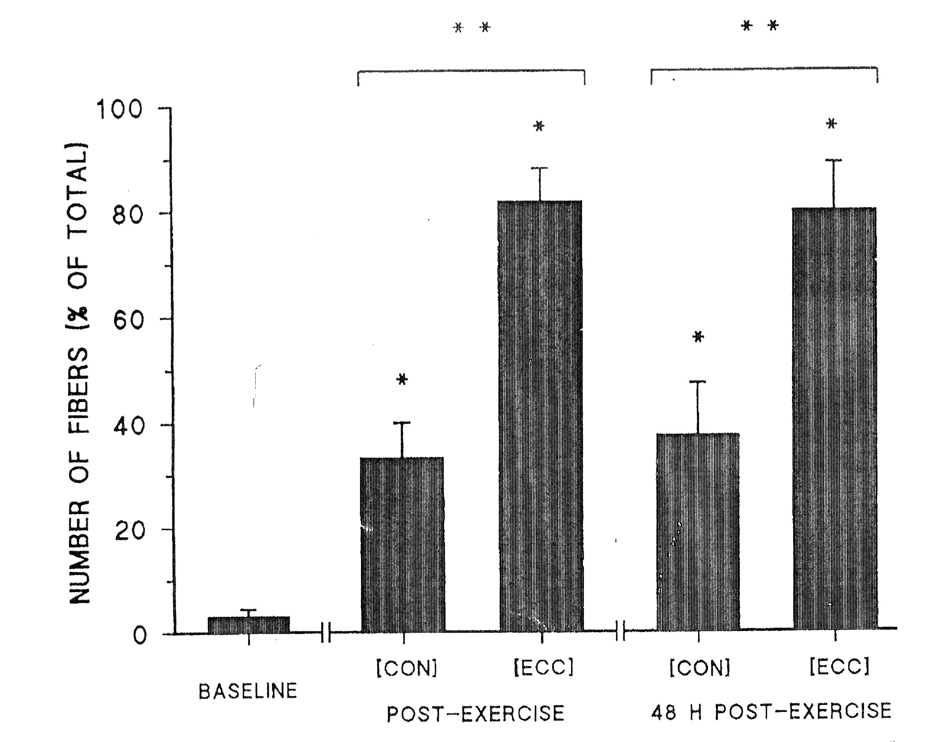 Изменения в микроструктуре и силе мышц человека после силовой тренировки
