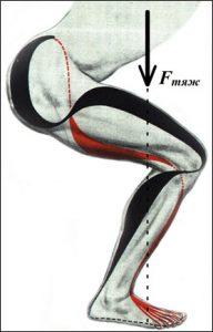 Антигравитационные мышцы