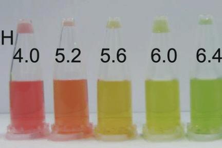 Миниатюра для записи рН крови, мочи и саркоплазмы мышечных волокон