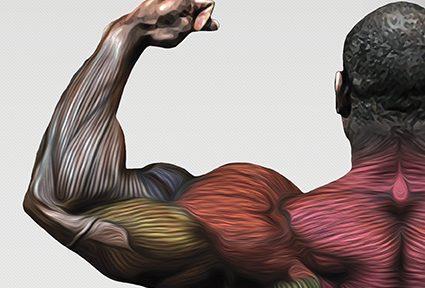 """Миниатюра для записи Учебное пособие - """"Гипертрофия скелетных мышц человека"""""""