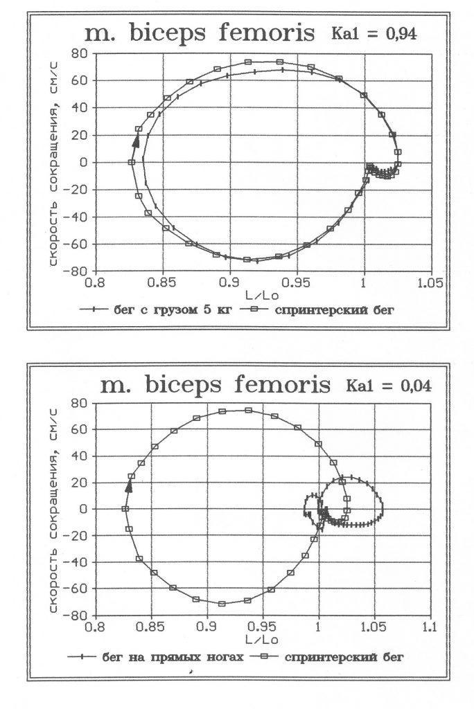 Моторные и сенсорные компоненты биомеханической структуры упражнений