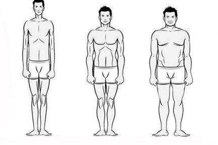 Миниатюра для записи Типы телосложения по Шелдону